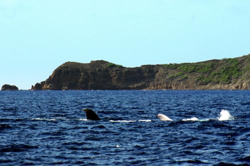 2018 04 05 Baleines (2).JPG